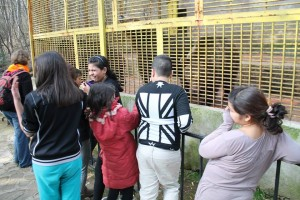 На зоопарк